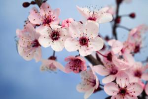 flori-primavara