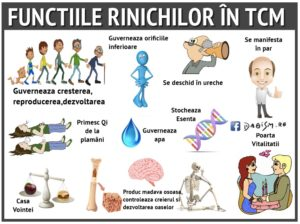 functii_rinichi_tcm